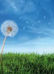 Ambiente: Gariglio (Pd), riforma Arpa ottima legge – Relatrice Accossato, Piemonte prima regione a fare riforma
