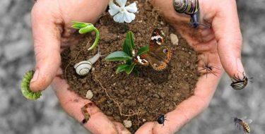 Oggi 5 giugno Giornata Mondiale dell'Ambiente