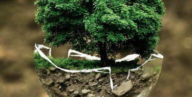 Giornata Mondiale dell'Ambiente. Furia-Miravalle: il PD Piemonte per la tutela del patrimonio ambientale e paesaggistico