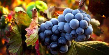 Approvato all'unanimità l'ordine del giorno di Marello e Rossi che chiedeva la proroga al 2022 delle scadenze per il settore vitivinicolo